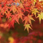 秋分の日2017年はいつ?秋分の日の意味は?決め方もお教えします!