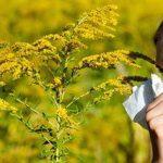 秋の花粉症はこの花木が原因!症状や時期やいつまで続くのかをまとめました!