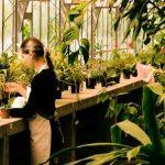 観葉植物に虫がわく理由!虫がつかない土は?対策と駆除方法を公開