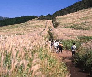 箱根仙石原すすき祭り2017。すすき草原の見頃や駐車場情報まとめ!